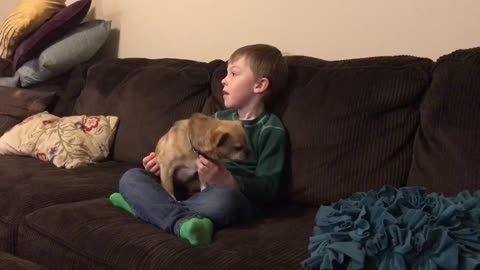 tiny dog demands attention from young kid