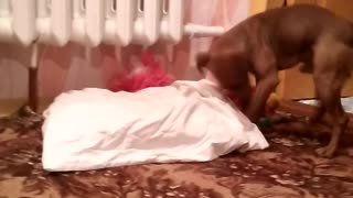 Smart dog is going to sleep