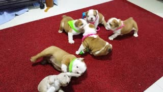 Baby Bully Fight Club, Part 2  - Video