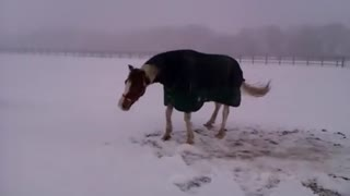 Horse and dog play in the show - Video