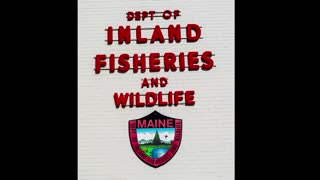 Maine Day 4 - Travel Day - Video