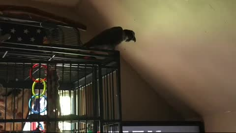 Parrot jams out to favorite hip hop artist