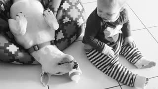 Baby and Bull Terrier share incredibly precious moment - Video
