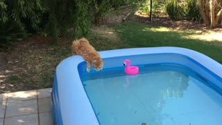 Cat drinks and keeps an eye on the flamingo