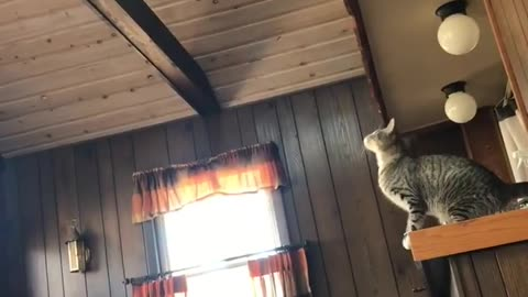 This Cat Attempts An Insane Jump That Ends Up In Epic Fail