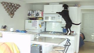 No Snack Can Escape This Dog's Reach - Video