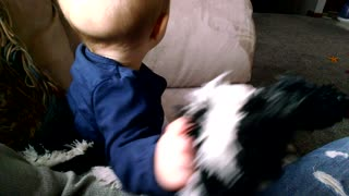 Sneaky Puppy Steals Toy From Distracted Baby - Video