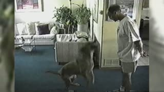 The Incredible Jumping Dog