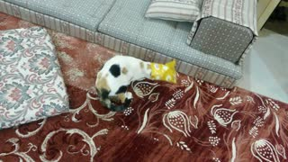 Kitten gets head stuck in bag of chips - Video