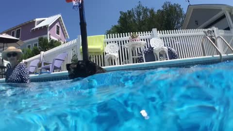 Adorable dog jumps off bodyboard to get ball *filmed in slow motion*