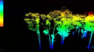 3D laser mapping 'weighs' trees - Video