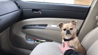 Dog refuses to let owner drive away - Video