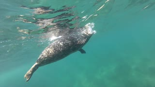 Diver's unique experience with playful seal - Video