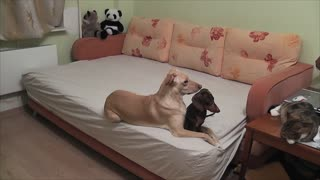 Here's what your dogs do when you're not home - Video
