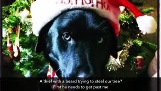 Merry Doggie Christmas! - Video