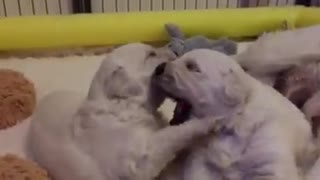 Puppy Kisses - Video