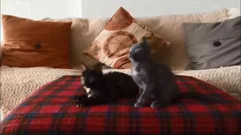 Kittens have heavy metal jam session