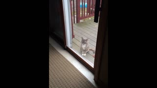Cat wants attention but other kitty ignores him - Video
