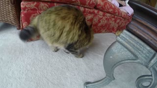 Cat gets head stuck in box - Video