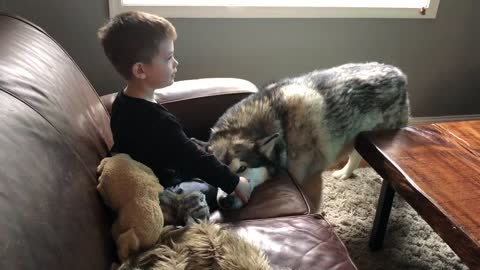 Dog enjoys burrowing head onto couch with boy