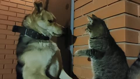 Boxing cat delivers lightning fast combo punch on doggy