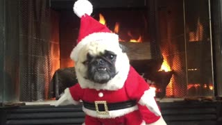 Santa Pug is coming to town - Video