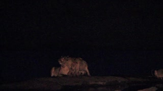 Lioness attacked by pack of hyenas - Video