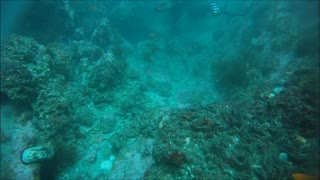 Diving Shaw's Cove  California - Video