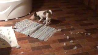 dog tore toy
