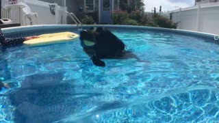 A dog, a bodyboard and her pool