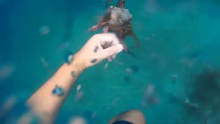 Octopus Hunting  - Video