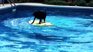 Intelligent body boarding dog - Video
