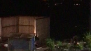 Black Bear Flips Dumpster - Video