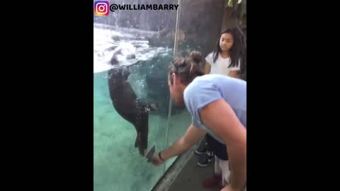 Adorable Otter Plays With The Human Behind The Glass