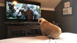 Bulldog has incredible reaction to actress in trouble - Video