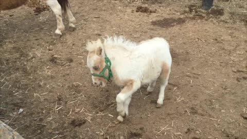Super Cute Baby Pony is playing and having fun!