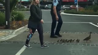 Mother and Ducklings Get Police Escort Across Street - Video