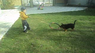 Little boy plays with puppy