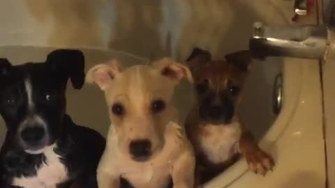 The cutest puppies tilt heads at foster dad
