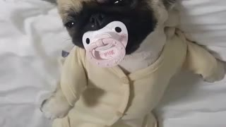 dog dressed baby - Video