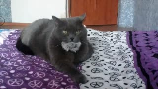 What at a cat in a mouth?  - Video