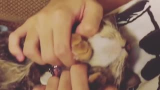 Cute Caty Loves His Friend - Video