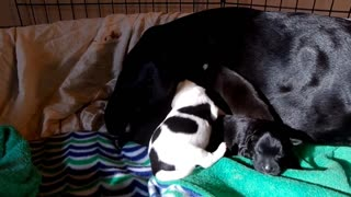 New foster mom and babies  - Video