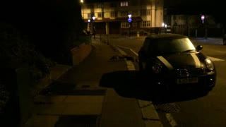Foxes Fighting Over Territory in South East London - Video