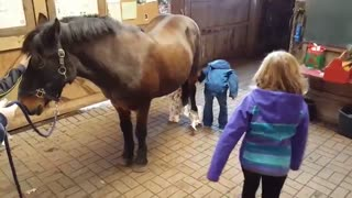 This Pony Is The Best Present EVER! - Video