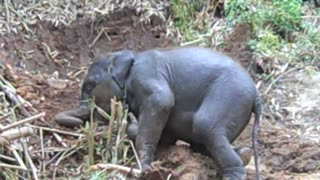 Adorable baby elephant enjoying playtime
