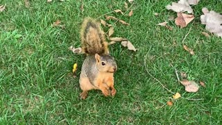Squirrel eating a goldfish cracker