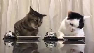 Amazing Cats - Video