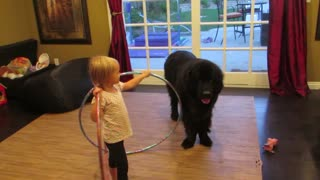 Toddler tries teaching dog to Hula Hoop - Video