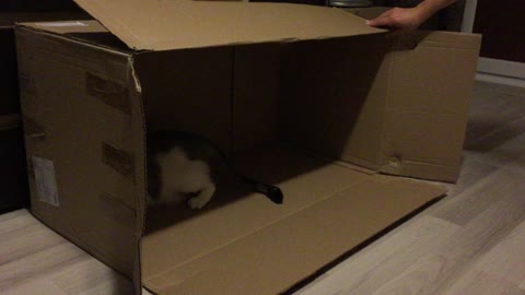 Cute kitties playing in a carboard box